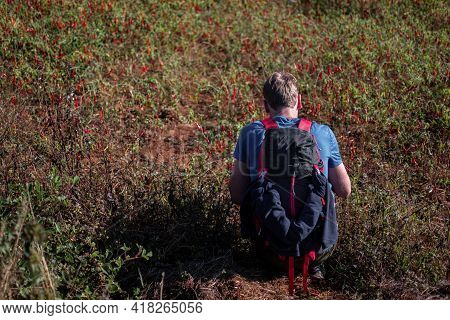 A Backpacker Sits Down And Hand Picks Red Hot Organic Chili From A Farm Field Between Kalaw And Inle