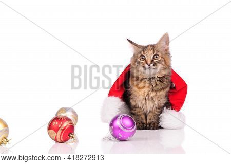 Beautiful Cat With Christmas Hat And Christmas Balls