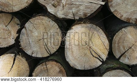 Background With Round Wooden Logs. A Pile Of Wooden Logs At The Edge Of The Forest. The Trunks Of Th