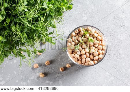Chickpeas Sprouts And Dry Chickpeas On A Light Table. Healthy Organic Food Grown At Home. Home Plant