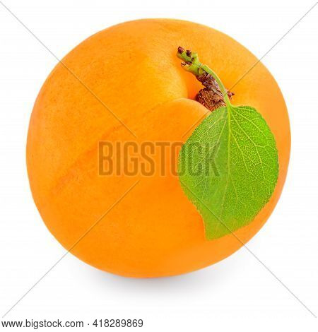 Isolated Apricot. Whole Single Apricot Fruit With Leaf Isolated On White Background. Fresh Apricot,
