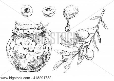 Canned Olives With Graphical Oil, Branches And Berries Set In Sketchy Style