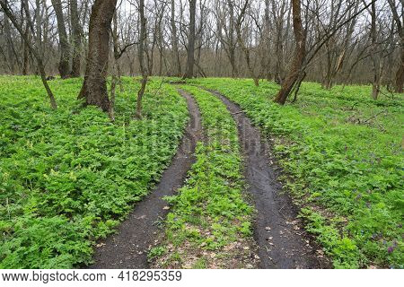 dirt road across green meadow in spring forest