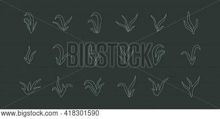 Lineart Seaweed Set Algae Aquatic Water Plant Grass For Aquarium. Isolated Vector Hand Drawn Illustr