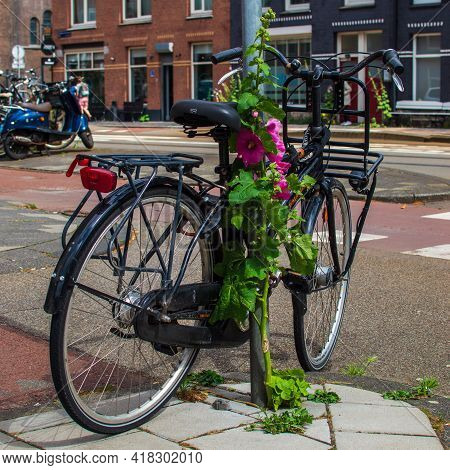 Amsterdam, The Netherlands, July 1, 2020. Bicycle Parked Against A Pole And Pink Hollyhock