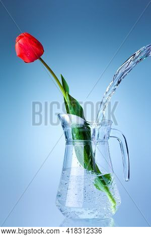 Glass Transparent Jug Filled With A Stream Of Flowing Water Into A Vase With A Red Blooming Tulip De