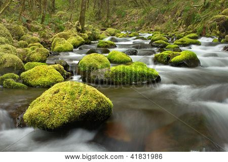 Mossy Rocks In Creek