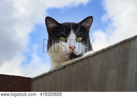 A Black Cat With A White Snout Against The Cloud Sky. With Eyes Of Different Colors. Sunny Autumn Da