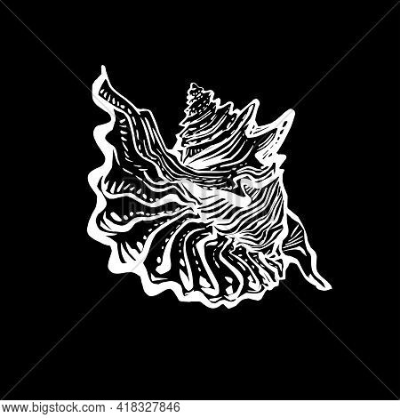 Doodle Seashell Of Marine Fauna In Live Line Style Hand Drawn. White Outline Sketch Design Element I