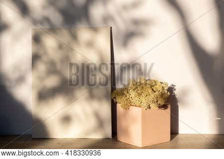 Mock Up Of An Empty White Canvas In Sunlight. Natural Moss In A Concrete Planter. Shadow Plant Patte