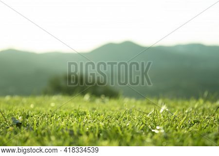 Defocused Mountain Landscape With Focused Grass Foreground. No People