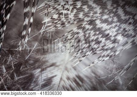 Grey Nice Plumage Texture. Close Up Photo