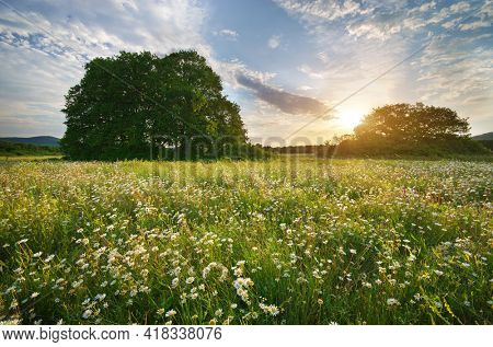 Beautiful camomile meadow in mountain at sunrise. Nature landscape composition.