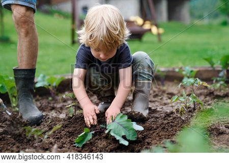 Small Boy With Father Working In Vegetable Garden, Sustainable Lifestyle.