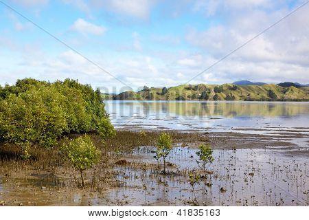 Hokianga Harbour Mangroves