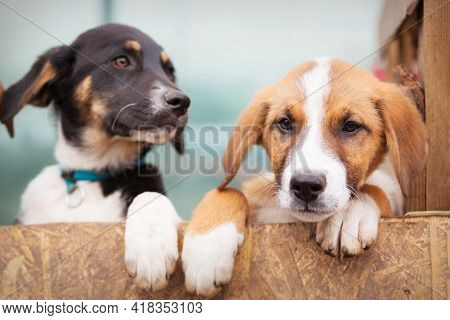 Portrait Of Two Sad Dog Puppies In Shelter Behind Fence Waiting To Be Adopted