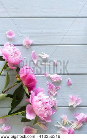 Spring, Summer Floral Still Life. Closeup Of Pink Peonies Flowers Isolated On Blue Wooden Background