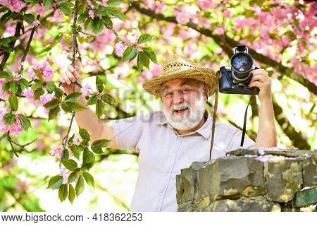 Spring Style. Sakura In Bloom Photography. Senior Bearded Man Photographing Pink Blossom. Profession
