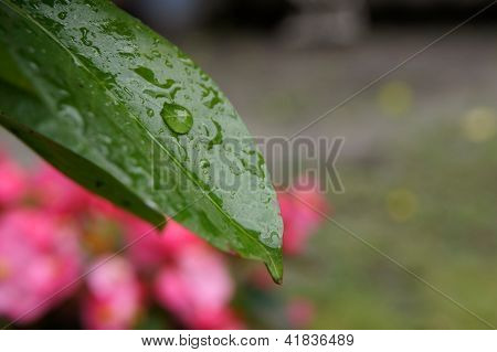 Wet leave