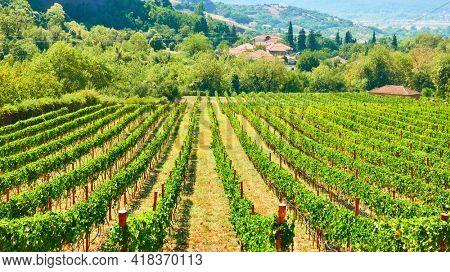 Vineyard in Greece. Rural scenic view. Kastraki village in Thessaly
