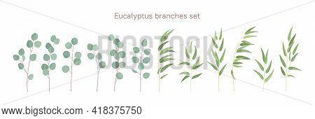 Eucalyptus Branches. Decorative Floristic Elements For Your Design. Flat Style.