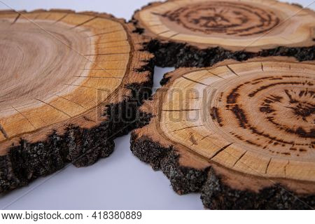 Cross Section Of The Tree. Tree Structure. Large Circular Piece Of Wood Cross Section With Tree Ring