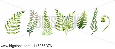 Fern Plant Watercolor Set. Green Stem Floral Collection. Fern Leaf Hand Drawn Element. Forest And Ga
