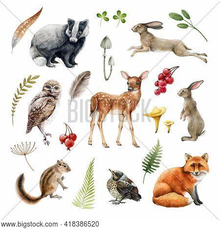 Forest Wild Animal Set. Watercolor Illustration. Fox, Badger, Rabbit, Deer, Chipmunk, Bunny, Owl, Bi