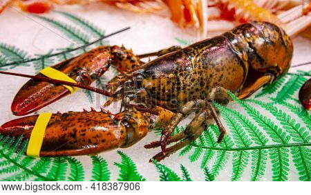 Fresh Lobster Lying On Ice For Sale At The Boqueria Market, Barcelona, Spain. Seafood Concept. Raw L