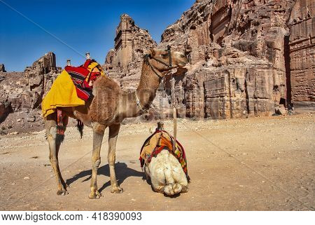 Two Dromedary Camels Resting In Front Of A Tomb In The Ancient City Of Petra