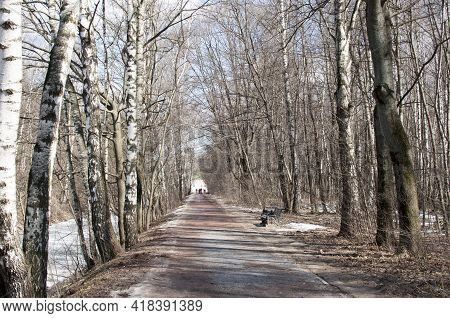Spring In The Park. Panorama Of A Park With An Alley And Trees Without Leaves.