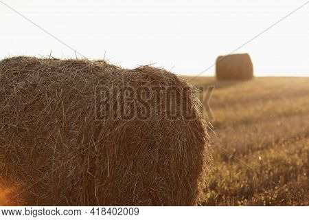Bales Of Wheat Hay Straw Stacked In A Heap In Stubble Field On A Summer Evening. Straw Bales On Farm