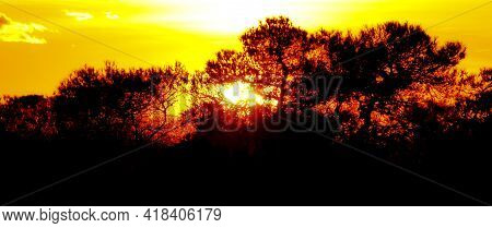 Countryside Landscape At Sunset With Pines, Bushes And Conifers In Alicante, Spain