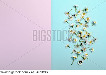 Flat Lay With Fresh Spring Flowers On Pastel Pink