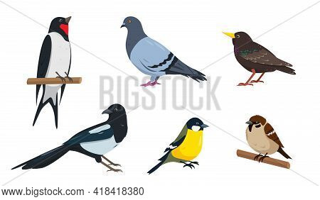 Sparrow, Tit, Starling, Swallow, Dove And Magpie