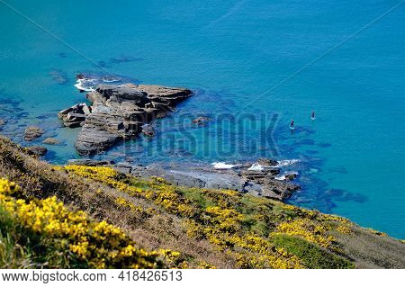 Paddle Boarders On The Cornish Coastline On Turquoise Water. There Are Out Of Focus Gorse Flowers Fr