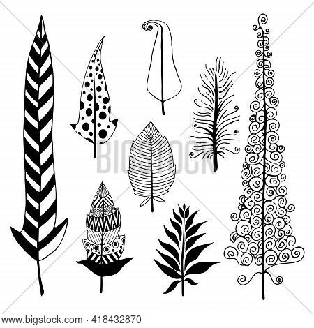 Vector Set Of Vintage Feathers. Isolated Bird Feathers On A White Background. Hand Drawn Black Doodl