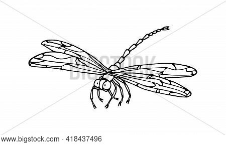 Decorative Dragonfly, Invertebrate Insect, Funny Character, Vector Illustration With Black Ink Conto