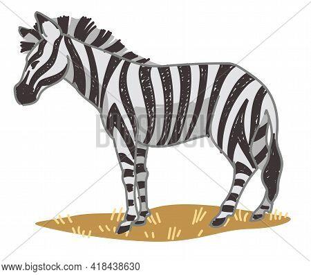 Zebra Equine Animal With Stripes On Skin Vector