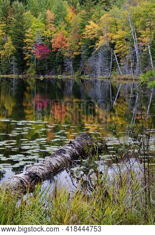 645-21 Autumn Color Starts To Dominate The Shore Of Red Jack Lake, Hiawatha National Forest, Alger C