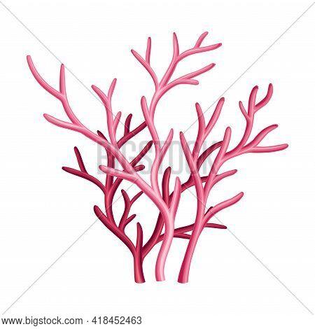Purple Coral As Marine Invertebrate From Ocean Bottom Vector Illustration