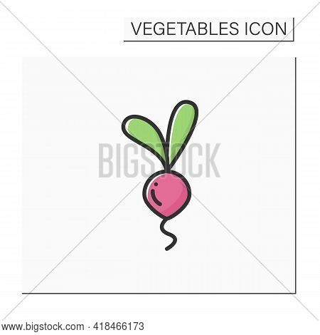 Beetroots Color Icon. Root Vegetable. Edible Plant. Vegetarian, Healthy Nutrition. Health Benefits.