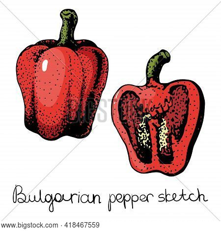 Pepper Hand Drawn Vector Set. Vegetable Isolated Object Full, Half And Slices Bell Pepper. Detailed