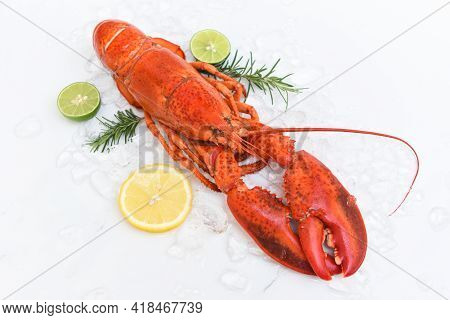 Fresh Lobster Food On White Plate Background, Red Lobster Dinner Seafood With Herb Spices Lemon Rose