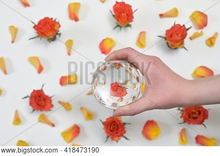 A Glass Round Lens Ball And Roses Reflexion In Studio
