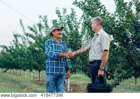 Handshake. Two Farmer Standing And Shaking Hands In A Plum Orchard. Agricultural Business.
