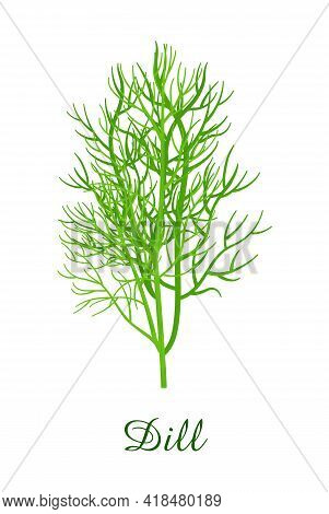 Dill Plant, Food Green Grasses Herbs And Plants Collection, Realistic Vector Illustration