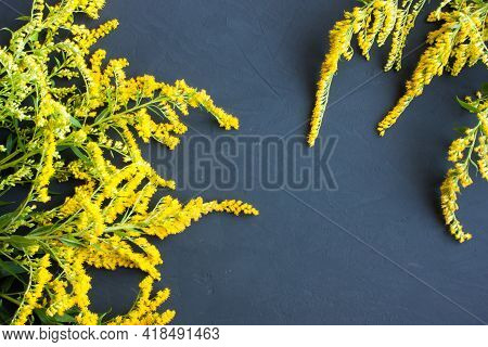 Sprigs Of Canadian Goldenrod With Delicate Yellow Flowers On A Gray Background, Copy Space