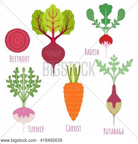 Rutabaga, Turnip, Carrot, Beetroot And Radish Isolated On White And Made In Flat Style. Beetroot Hal