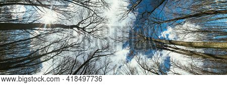 panorama spring forest trees. nature green wood sunlight backgrounds.